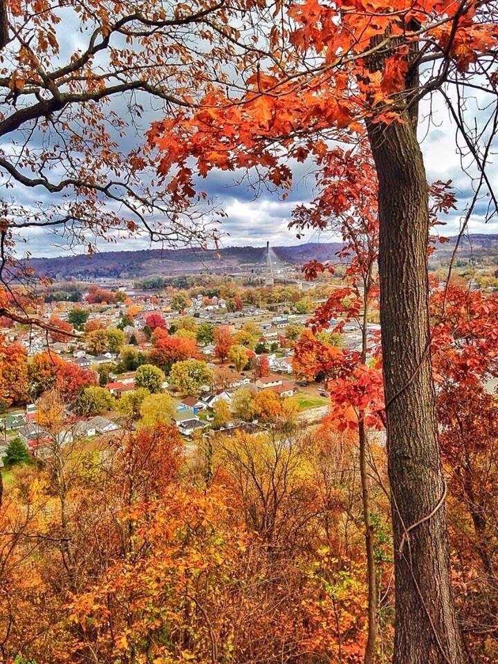 Beautiful fall leaves in West Virginia
